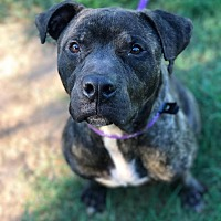 Adopt A Pet :: Buck - Fort Valley, GA