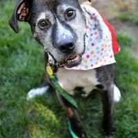 Adopt A Pet :: Henry - Corvallis, OR