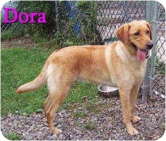 Golden Retriever Mix Dog for adoption in Bloomsburg, Pennsylvania - Dora