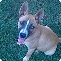 Adopt A Pet :: Donkey - Conyers, GA