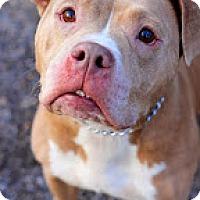 Adopt A Pet :: Tiny - Tinton Falls, NJ