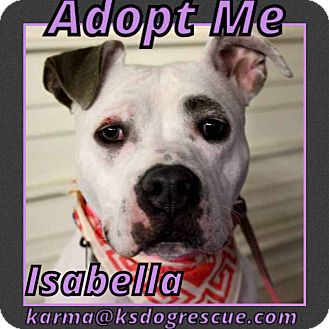 Pit Bull Terrier Mix Dog for adoption in Cheney, Kansas - Isabella