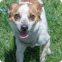 Adopt A Pet :: OMAR - Coudersport, PA