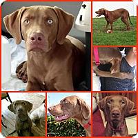 Adopt A Pet :: JAX - Inverness, FL