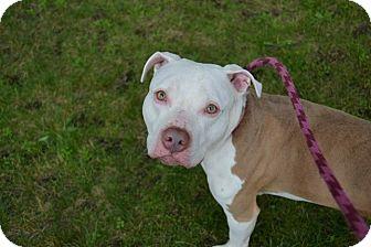 Terrier (Unknown Type, Medium) Mix Dog for adoption in Brookhaven, New York - Marlin
