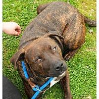 Adopt A Pet :: Jasmine - Crandall, GA