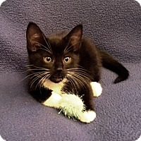 Adopt A Pet :: Sandals - Templeton, MA