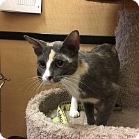 Adopt A Pet :: ROWENA - Brea, CA
