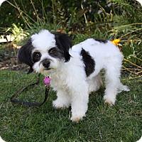 Adopt A Pet :: PLAYDOH - Newport Beach, CA