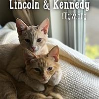 Adopt A Pet :: Lincoln - Merrifield, VA