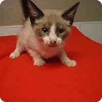 Adopt A Pet :: Eli - Batesville, AR