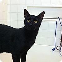 Adopt A Pet :: Jax - Lafayette, CA