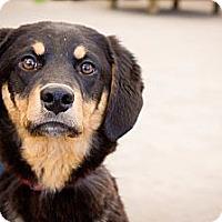 Adopt A Pet :: Hulk - Saskatoon, SK