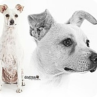Adopt A Pet :: River - Lake Forest, CA