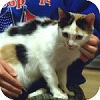 Adopt A Pet :: Mary Kate - Colorado Springs, CO