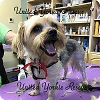 Adopt A Pet :: Duelie - Martinsburg, WV