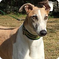 Adopt A Pet :: Series - West Palm Beach, FL