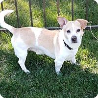 Adopt A Pet :: Boo Boo - Meridian, ID