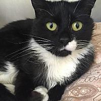 Adopt A Pet :: May - Cambridge, MD