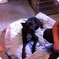 Adopt A Pet :: Prince - Hicksville, NY