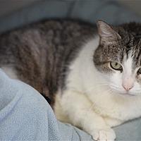 Adopt A Pet :: Ziggy - Red Collar - North Branch, NJ