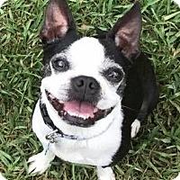 Adopt A Pet :: Benji - Katy, TX