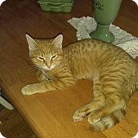 Adopt A Pet :: Caramel - Bainsville, ON