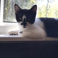 Adopt A Pet :: Spencer - Athabasca, AB