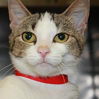 Adopt A Pet :: CASSIE - Clayton, NJ