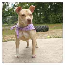 Terrier (Unknown Type, Medium) Mix Dog for adoption in North Charleston, South Carolina - Nala