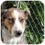 Photo 1 - Border Collie Dog for adoption in San Pedro, California - ELLIE
