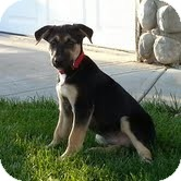 Border Collie Mix Puppy for adoption in Okotoks, Alberta - Declan