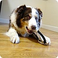 Adopt A Pet :: Ozzie - Washington, IL