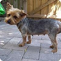 Adopt A Pet :: Heather - CAPE CORAL, FL