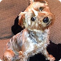 Adopt A Pet :: Blossom - Austin, TX