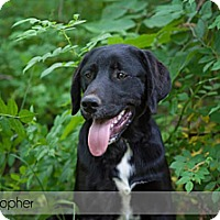 Adopt A Pet :: Christapher - Lewisville, IN