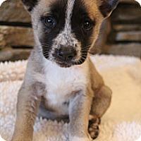Adopt A Pet :: Coda - Wytheville, VA