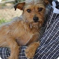 Adopt A Pet :: Lolly - Athens, GA