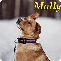 Adopt A Pet :: Molly - AP April 2016 - Huntsville, ON