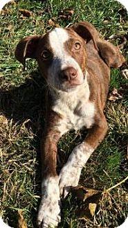 Terrier (Unknown Type, Medium) Mix Puppy for adoption in Marlton, New Jersey - Twiggy