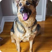 Adopt A Pet :: Heidi - Rigaud, QC