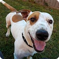 Adopt A Pet :: Romeo - Woodstock, GA