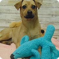Adopt A Pet :: CYPRESS - Cleveland, MS