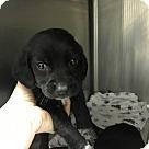 Adopt A Pet :: Potsy