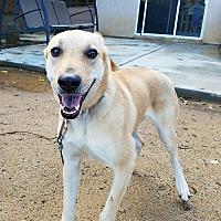 Adopt A Pet :: Maggie - Corona, CA