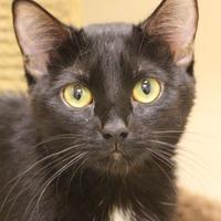 Adopt A Pet :: Sarabi - Dodgeville, WI