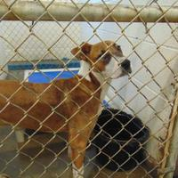 Adopt A Pet :: BELLA - Cleveland, MS