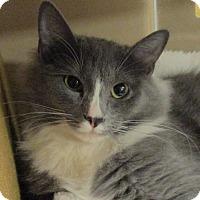 Adopt A Pet :: MIMI - Diamond Bar, CA