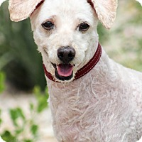 Adopt A Pet :: Orbit - Apple Valley, UT