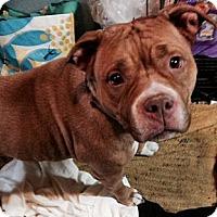 Adopt A Pet :: angella - Wanaque, NJ